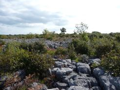 Limestone Pavement - Lough Mask