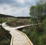 Slieve Bloom NR boardwalk