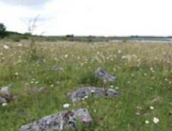 Photo of calcareous grasslands at Lough Corrib