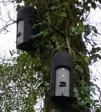 Union Wood - bat boxes
