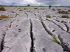Sheshymore Limestone Pavement