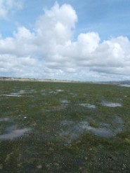 Tralee Bay Zostera Bed