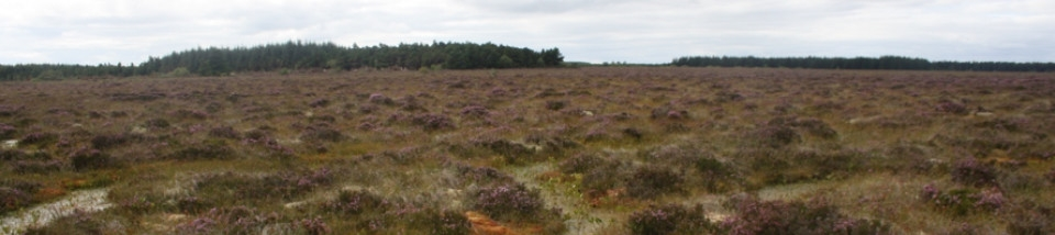 Picture of peat bog