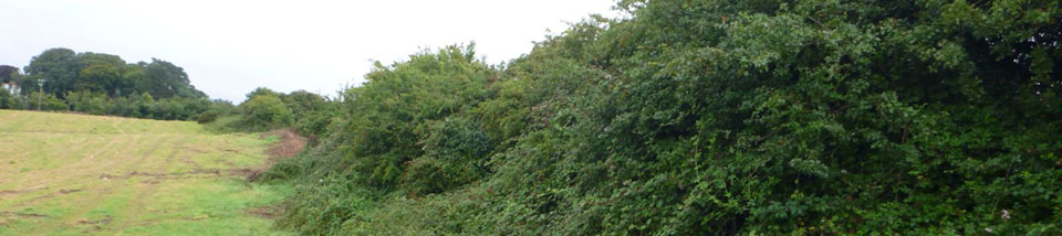 Restrictions on cutting or destruction of vegetation and hedgerows