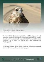 CITES Saker Falcon poster thumbnail image