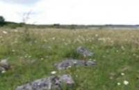 Photo of Calcareous grassland at Lough Corrib