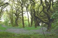 Image of ancient woodland