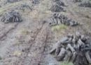 Picture of turf in bog