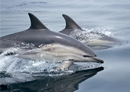 Photo of dolphins swimming